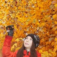 Мне бы осенью стать... :: Елена Князева
