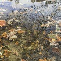Отражение в пруду :: Viacheslav Birukov