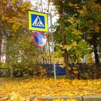 Переход в осень. :: Алексей Цветков