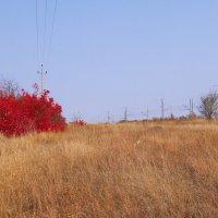 Осенние краски :: Сергей Махонин