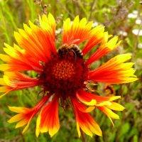 осенний цветок :: Александр Прокудин
