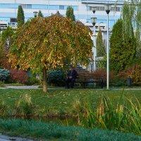 парк :: Вера Корниенко