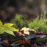 Лесной натюрморт :: Эдуард Куклин