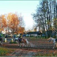 Красна ложка едоком, а лошадь ездоком.. :: Vladimir Semenchukov
