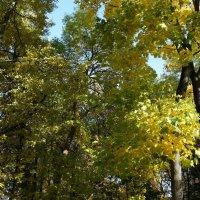 Свет Осени ... :: Алёна Савина