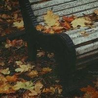 Осень в Петербурге. Петроградская сторона. :: Ксения Старикова