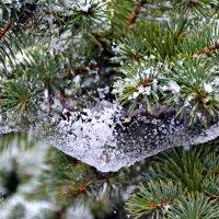 Первый снежок... :: Алёна PRIVALOVA