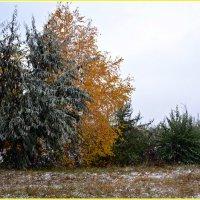 Осень золотая... :: Алёна PRIVALOVA