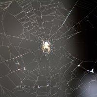 Паук плетет паутину :: Олька Крайнова