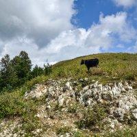 Где-то высоко в горах :: Ирина Никифорова