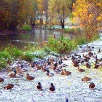 Снимки с передовой  Первый снег в  Москве :: олег свирский