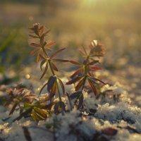 первое дыхание зимы :: Татьяна