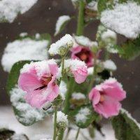 Первый снег :: Ната Волга