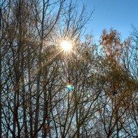 Cолнечное утро на берегу Брынского водохранилища :: Павел Вячеславович