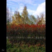 Осенний пирог (желтый-красный-зеленый) :: Alex Sash