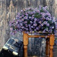 С осенними цветами :: Liliya