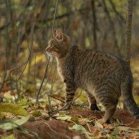 сам по себе кот. :: Ирина Солощ