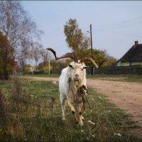 Хозяин деревни :: Елена Ерошевич