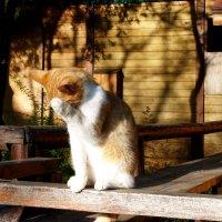 жизнь кошки :: elena manas