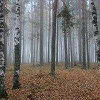 Утро туманное.. :: Ната Волга