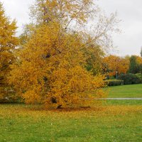 осень золотая :: elena manas