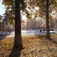 Первый снег в Самаре :: Александр Алексеев