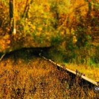 Дорога в осень :: Дмитрий Чернов