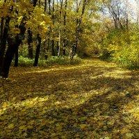 Устроила осень в саду листопад... :: LORRA ***