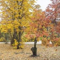 Вот и осень...☺ :: Юрий Казарин