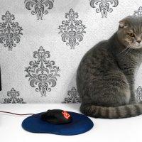 Кот и мышка. :: Alex 711402