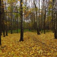 Зрелая осень :: Андрей Лукьянов