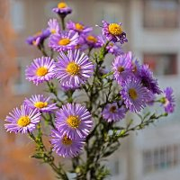 Последние цветы ушедшей осени :: Анатолий Иргл