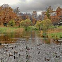 Детский пруд осенью :: Олег Попков