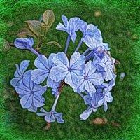 Голубые цветы :: Nina Yudicheva
