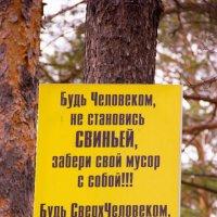 *** :: Вадим Басов