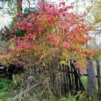 Яркие краски в серую осень :: Катя Бокова