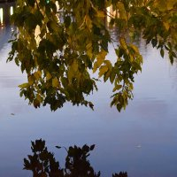 Чистые пруды, вечер, осень. :: Татьяна Помогалова