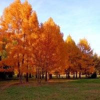 оранжевая осень :: Наталья Сазонова