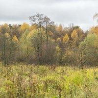 Осенний пейзаж :: Игорь Герман