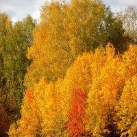 Ах,эта осень золотая. :: nadyasilyuk Вознюк