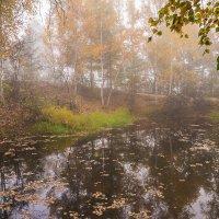 Утро у старого пруда. :: Сергей Щелкунов
