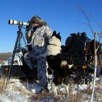 Фото охота. :: Сергей Елисеев