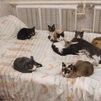 Наши кошки :: Александр Крупский