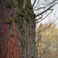 дерево :: елена