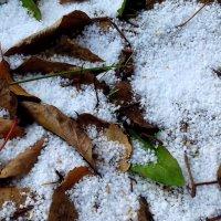 Первый снег . :: Мила Бовкун