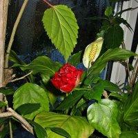 цветы на подоконнике :: Александр Корчемный