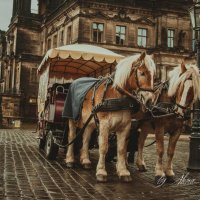 Plush horses :: Алёна Архангелова
