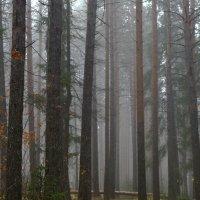 Тропа в тумане. :: Наталья