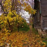 Осень укрыла золотым ковром старую улицу мою . :: Святец Вячеслав