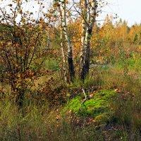изумрудный мох :: оксана